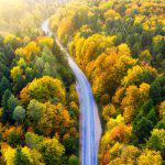 Aerial view on the forest road. Autumn forest from air during sunset. Landscape from drone at the autumn time. Autumn - image